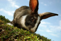 Rabbit on the hill. A closeup shot of a rabbit on a slope Stock Photo