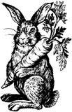 Rabbit Holding Carrot Stock Image