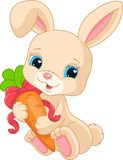 Rabbit holds carrot Stock Photo