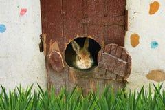 Rabbit house Royalty Free Stock Photography