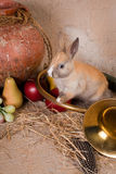 Rabbit and hunting horn Stock Photo