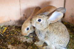 Rabbit in  a hutch Royalty Free Stock Image