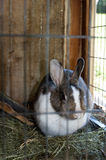 Rabbit in the hutch. Mottled rabbit in the hutch stock photography