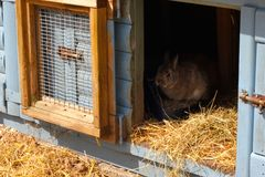 Rabbit in hutch Stock Photos