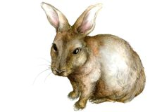 Rabbit Illustration Royalty Free Stock Photo