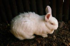Rabbit Stock Images