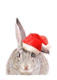 Rabbit In A Santas Hat. Royalty Free Stock Photo