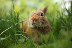 Rabbit In Green Grass Royalty Free Stock Photos