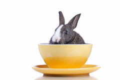 Rabbit inside a bowl. (isolated on white Stock Photos