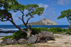 Rabbit Island Oahu Royalty Free Stock Images
