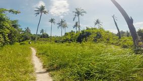 Walking on a trail along palm trees and forest jungle on Rabbit Island, Kaoh Tonsay, Cambodia stock footage