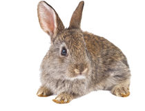 Rabbit isolated Stock Images