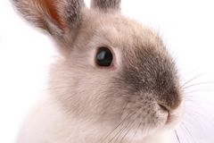A rabbit isolated stock photos