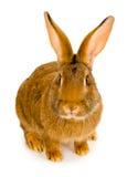 Rabbit isolated Stock Photos
