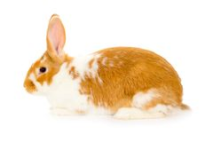 Rabbit isolated Royalty Free Stock Photos