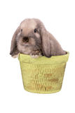 Rabbit isolated on a white. Background Stock Photos