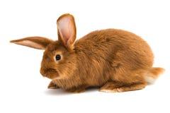 Rabbit isolated. On white background royalty free stock image