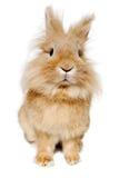 Rabbit isolated on white background Royalty Free Stock Photography