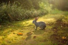 Rabbit .jpg Royalty Free Stock Photo