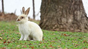 Rabbit jump and play fun happy,two young rabbit jump and play dandle fun happy on ground grass green stock footage