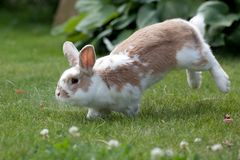 Rabbit jumping on the grass stock photos