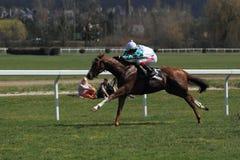 Rabbit king - horse racing in Prague Royalty Free Stock Photos