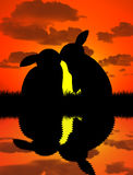 Rabbit kissing at sunset with shadow water Royalty Free Stock Images