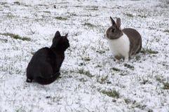 Rabbit and kitten on a snowy garden Stock Photos