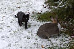 Rabbit and kitten on a snowy garden Stock Image