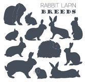 Rabbit, lapin breed icon set. Flat design Stock Images