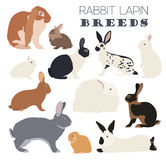 Rabbit, lapin breed icon set. Flat design Stock Photography