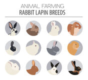 Rabbit, lapin breed icon set. Flat design Stock Photography