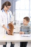 Rabbit of little boy at pets' clinic. Veterinary examining pet animal Stock Images