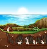 Rabbit living in underground Stock Photography
