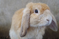 Rabbit looking and thinking, selective focus Stock Images