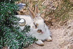 Rabbit lying under the Christmas tree Royalty Free Stock Images