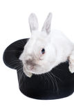 Rabbit in magic hat Royalty Free Stock Images