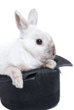Rabbit in magic hat Stock Photo
