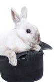 Rabbit in magic hat Stock Photo