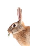 Rabbit with meal Royalty Free Stock Photos