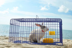 Rabbit in a metal cage Stock Photos