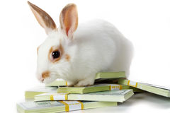 Rabbit with money Royalty Free Stock Photo