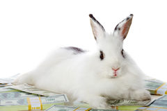 Rabbit with money Stock Image