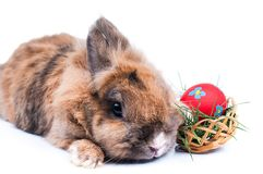 Rabbit on a white background Royalty Free Stock Image