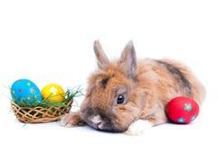 Rabbit on a white background Stock Image