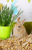 Rabbit near the grass Stock Images