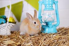 Rabbit near the lantern Stock Photography