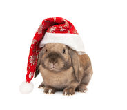 Rabbit in the New Year hat Stock Image