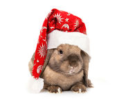 Rabbit in the New Year hat Royalty Free Stock Photography