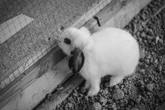 Rabbit. A rabbit in the nick Royalty Free Stock Images
